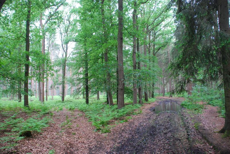 Wald in Bochwinkel royalty free stock images