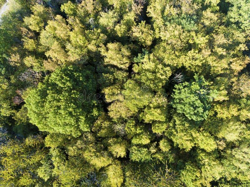 Wald in Burnhaupt-Le-Bas, Haut-Rhin lizenzfreie stockfotografie