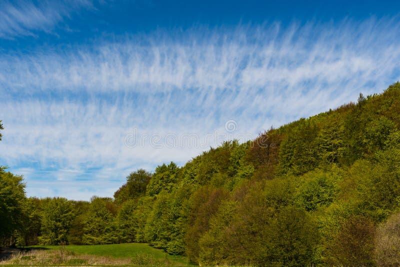 Wald in Dänemark lizenzfreies stockfoto