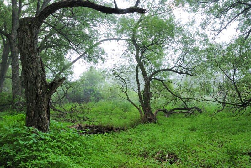 Wald Darlinton des provinziellen Parks stockbilder