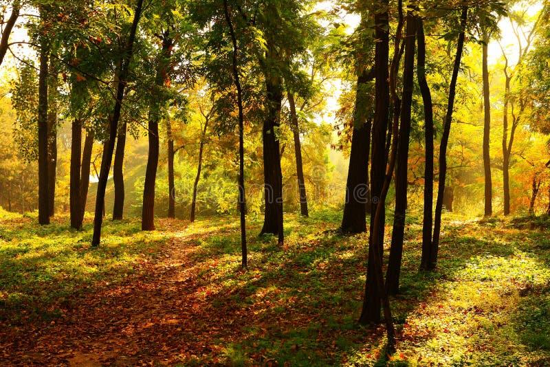Wald in der Dämmerung stockfotografie