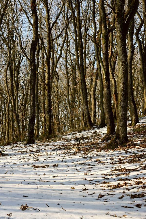 Wald in der Winterzeit stockfoto