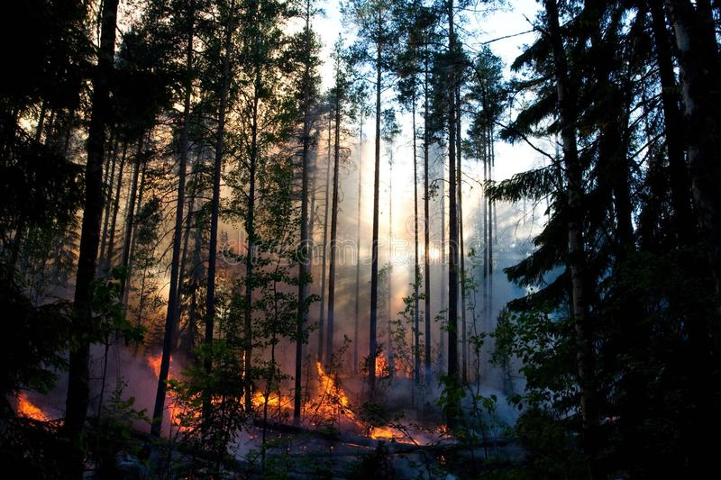 Wald des Feuers lizenzfreie stockbilder