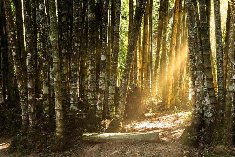 Wald des riesigen Bambusses stockbild