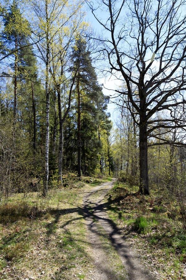 Wald des Weges im Frühjahr und schöner Baumschatten stockbilder