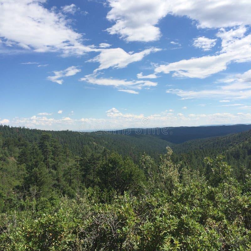 Wald für Meilen lizenzfreie stockbilder