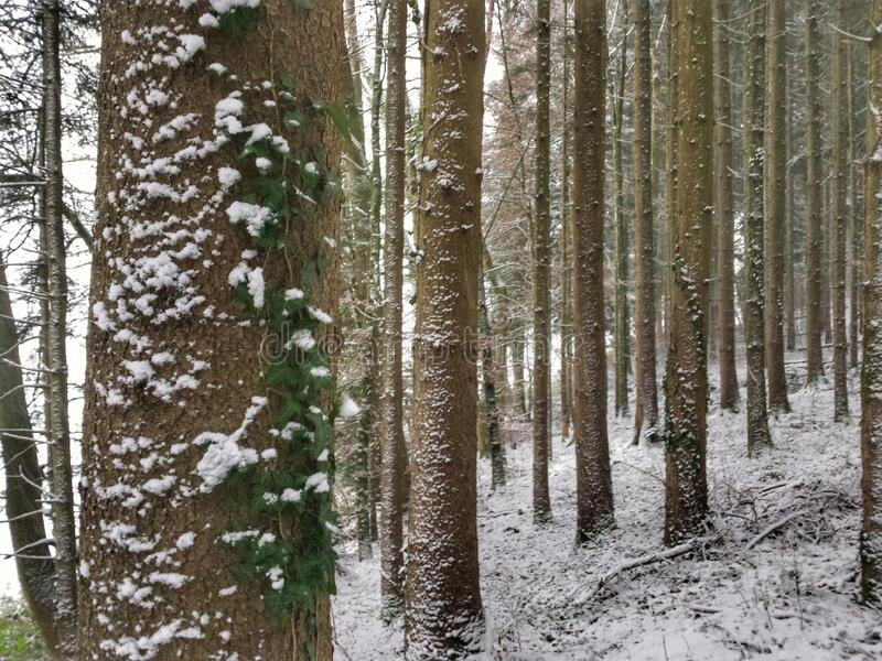 Wald-gibt MIR Energie stockfotografie
