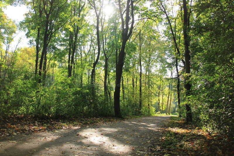 Wald, Haagse-Bos im Fall lizenzfreie stockfotografie