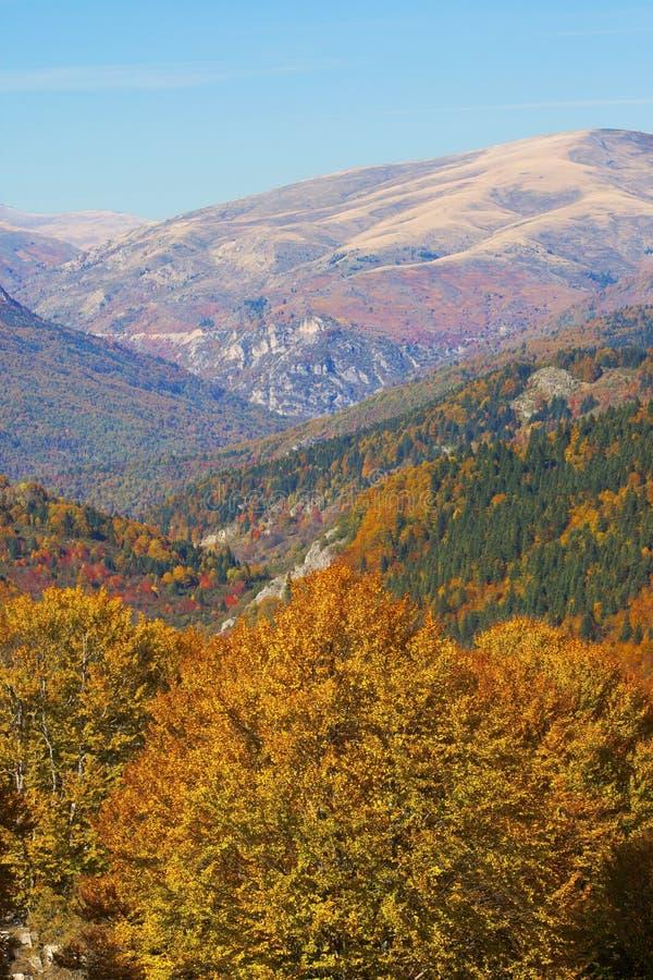 Wald im Fall stockfotografie