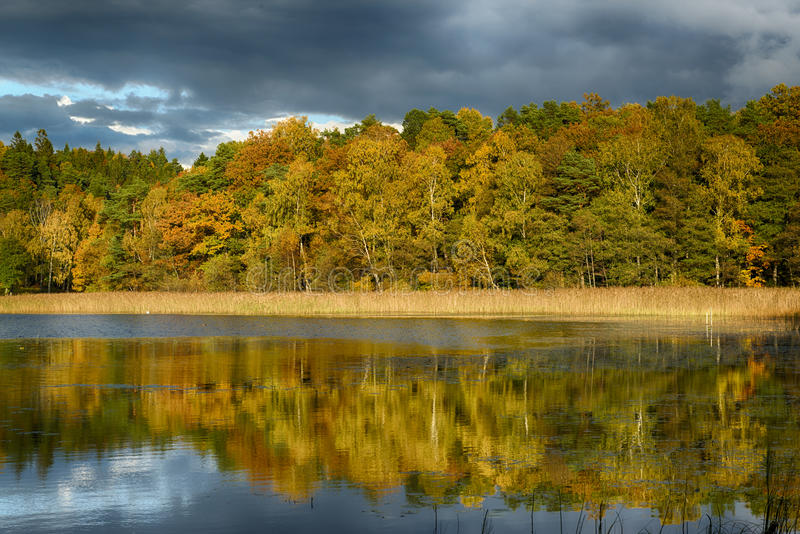 Wald im Fall stockfoto