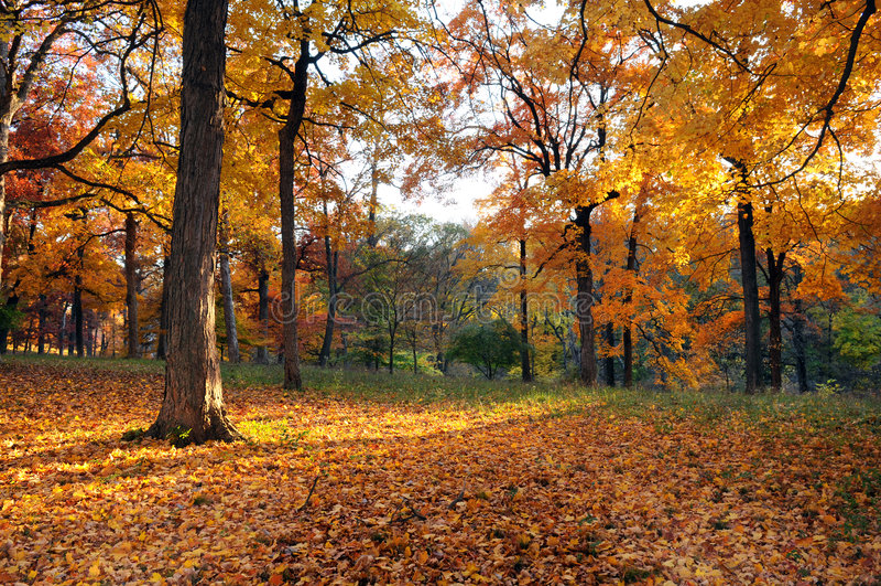 Wald im frühen Fall lizenzfreie stockbilder