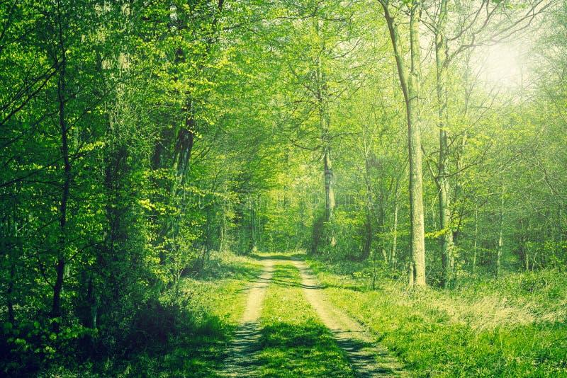 Wald im Frühjahr lizenzfreies stockbild
