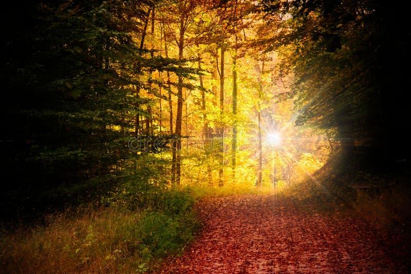 Wald im Herbst stockbild