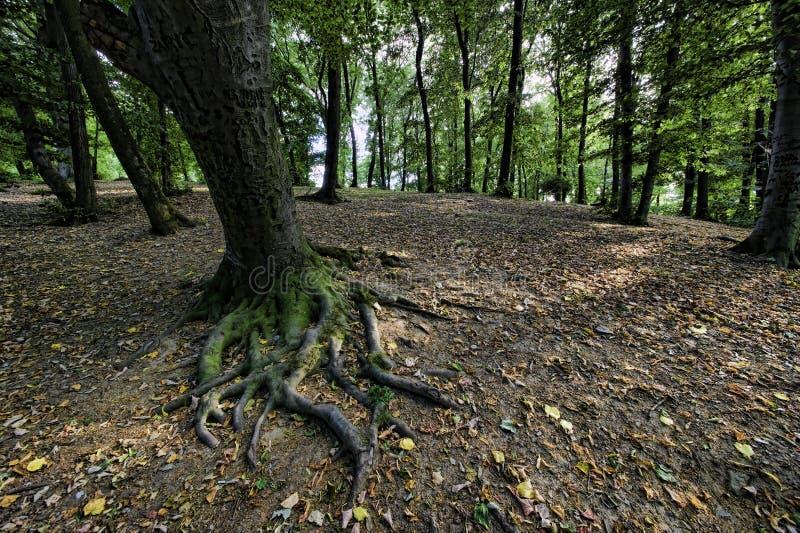 Download Wald im Herbst stockbild. Bild von serbien, jahreszeit - 27729781