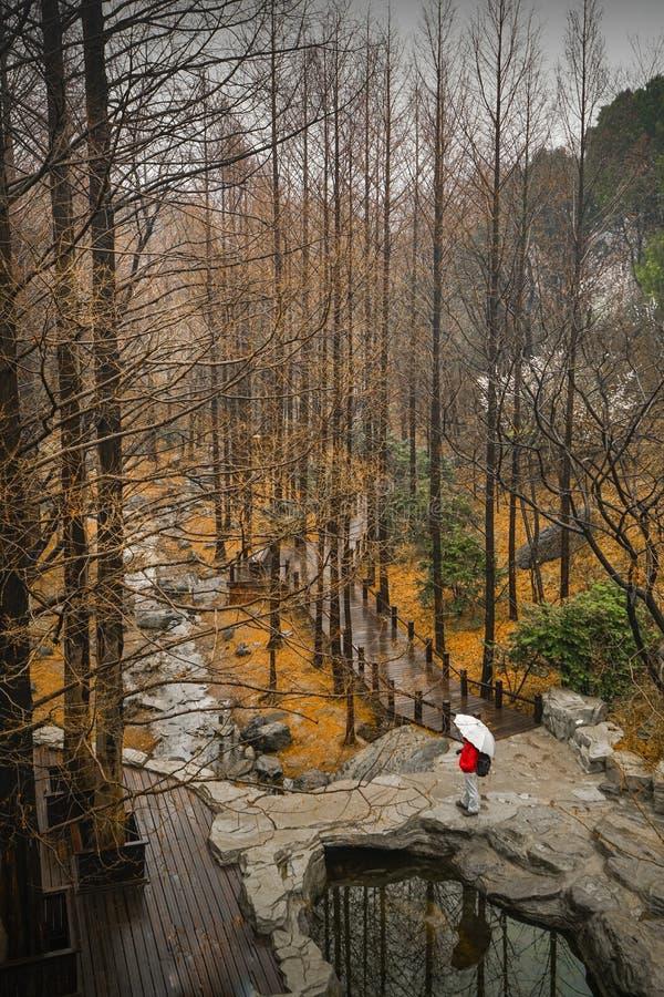 Wald im Herbst stockfotos