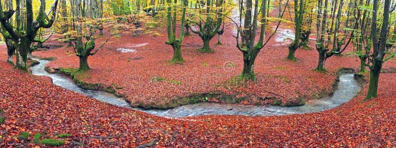 Wald im Herbst mit einem Strom lizenzfreie stockfotos
