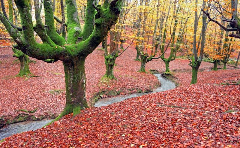 Wald im Herbst mit einem Strom stockfoto