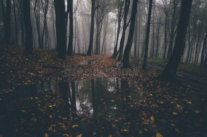 Wald im Herbst mit gefallenen Blättern stockfotos