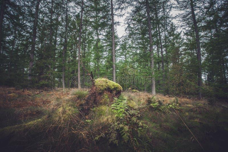 Wald im Herbst mit grünem Moos stockfotografie