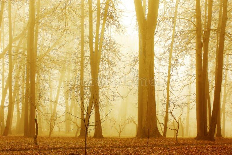 Wald im Nebel des frühen Morgens stockbilder