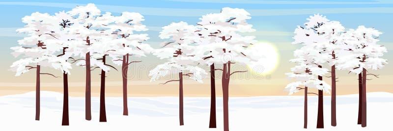 Wald im Schnee Kiefern und Lichtung lizenzfreie abbildung