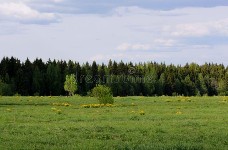 Wald im Sommer stockbild