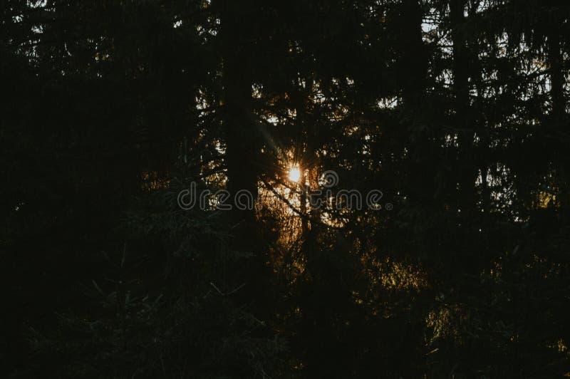 Wald im Sonnenuntergang stockfoto