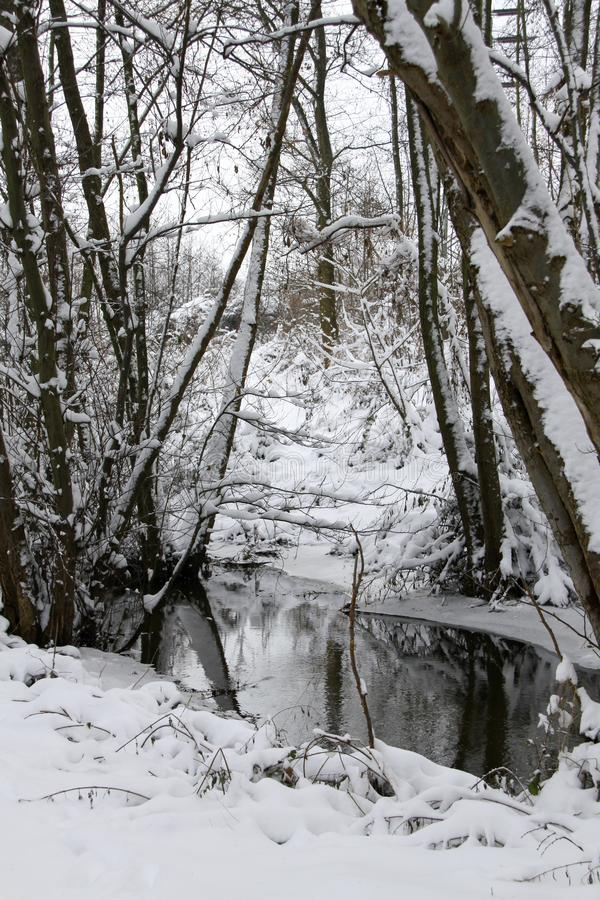 Wald im Winter bei The Creek stockbilder