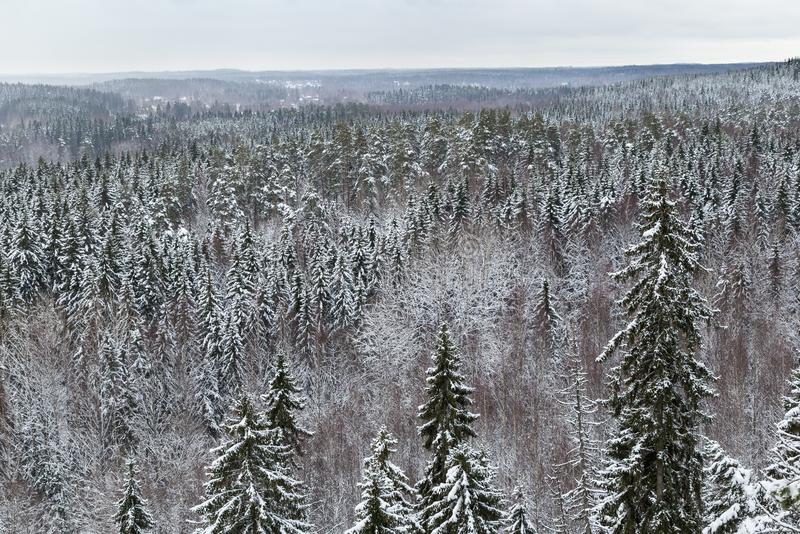 Wald im Winter in Finnland lizenzfreies stockbild