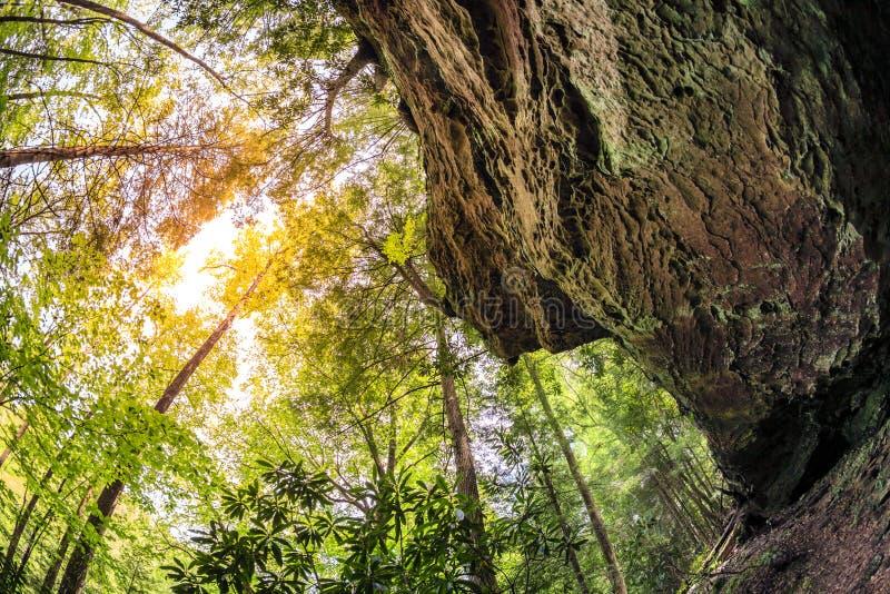 Wald in Kentucky stockfoto