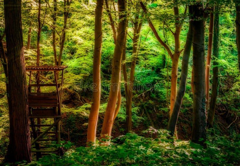 Wald Märchenwald Siebengebirge lizenzfreie stockfotografie