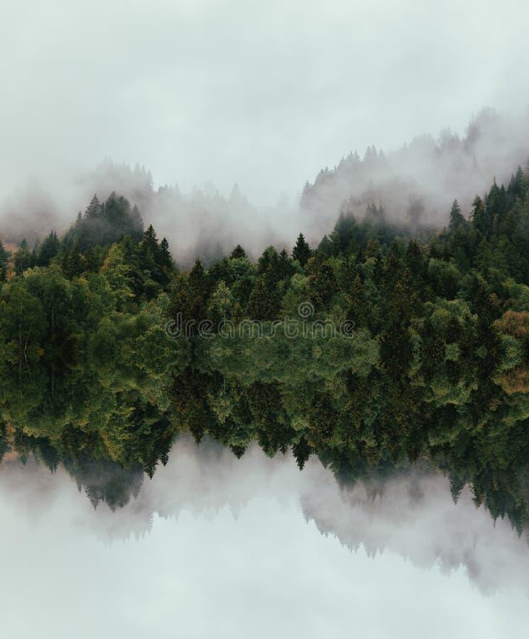Wald mit dichtem Nebel morgens stockfotos