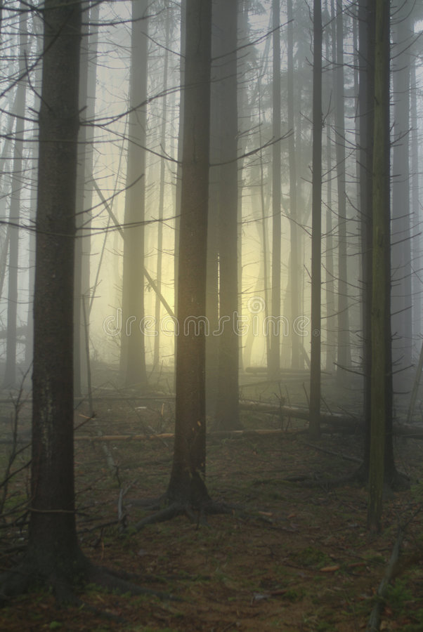 Wald mit Glühen stockfotografie