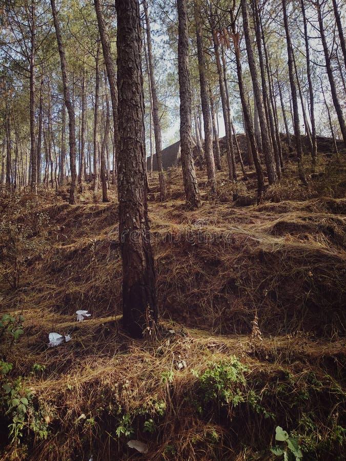 Wald mit gro?en B?umen stockfotografie