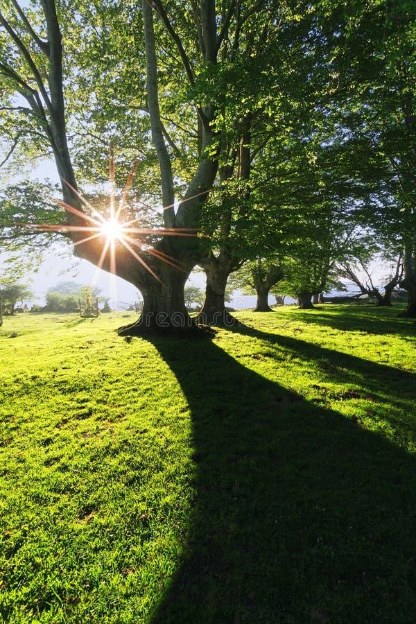 Wald mit Licht und Schatten stockfotos