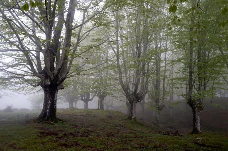 Wald mit Morgen lizenzfreie stockfotografie