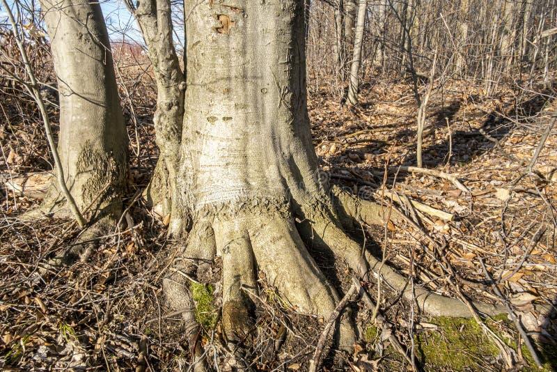 Wald mit Wurzeln stockfotografie