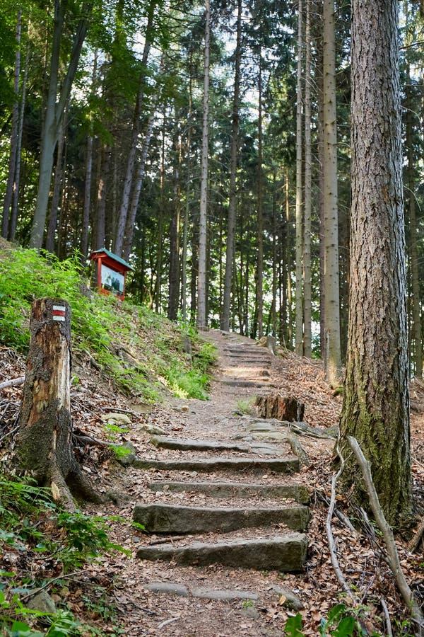 Wald nahe Dorf Mala Skala, böhmisches Paradies lizenzfreies stockbild