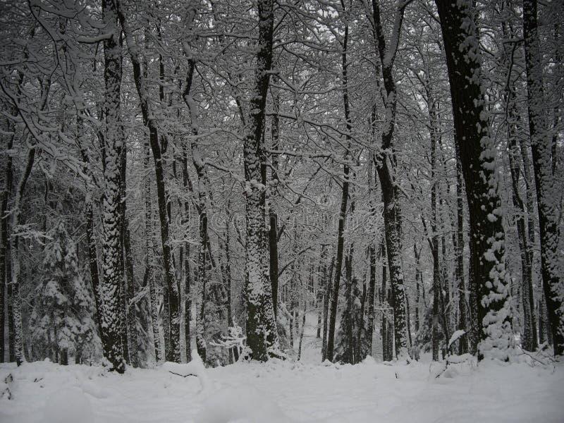 Wald nahe einer mitteleuropäischen Stadt nach ersten Schneefällen in der Wintersaison lizenzfreie stockbilder