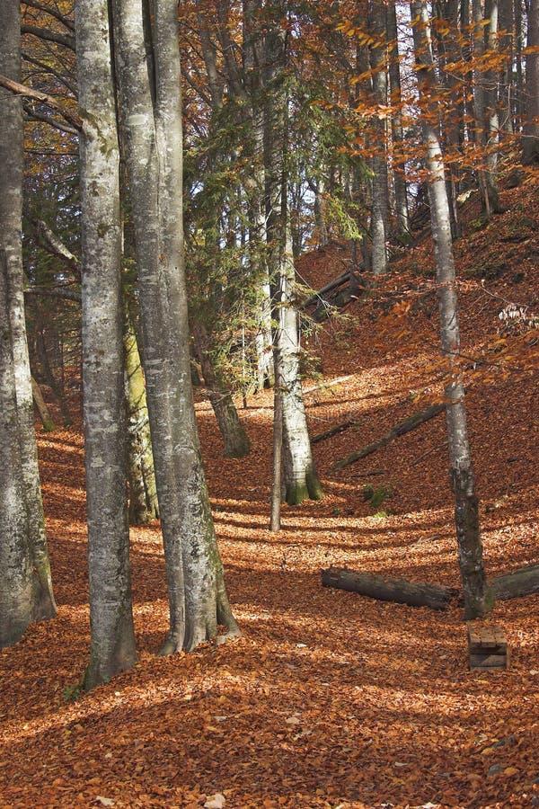 Wald nahe Plitivce Seen nationa Park, Kroatien lizenzfreies stockfoto