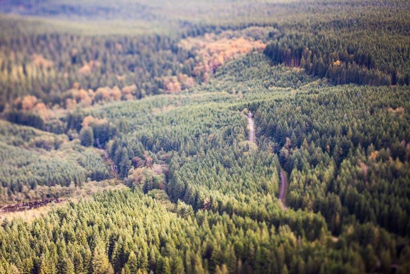 Wald, Neigungsschiebeeffekt lizenzfreies stockfoto