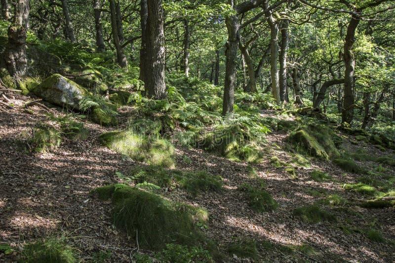 Wald in Padley-Schlucht, Derbyshire, England lizenzfreie stockbilder