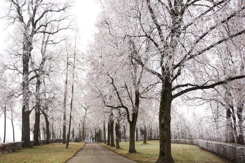 Wald pendant l'hiver photographie stock