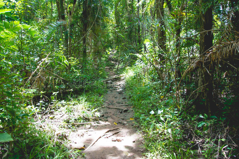 Wald am saraburee lizenzfreie stockfotografie
