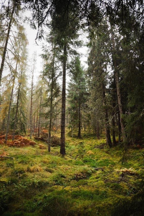 Wald in Schottland lizenzfreie stockfotos