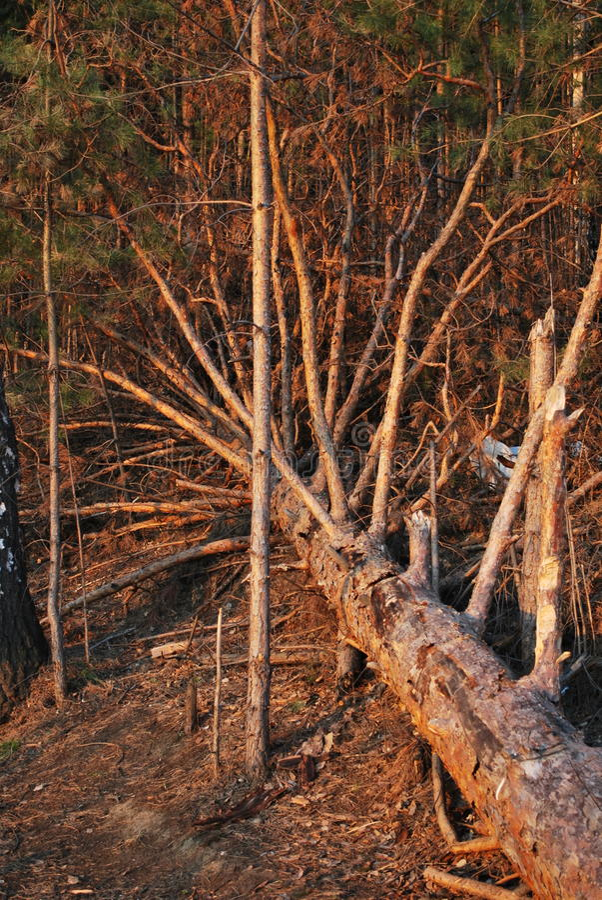 Wald in Sibirien stockbild