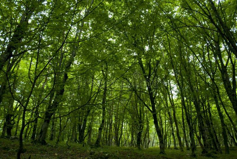 Wald in Sjunik-Provinz Armenien lizenzfreie stockfotografie