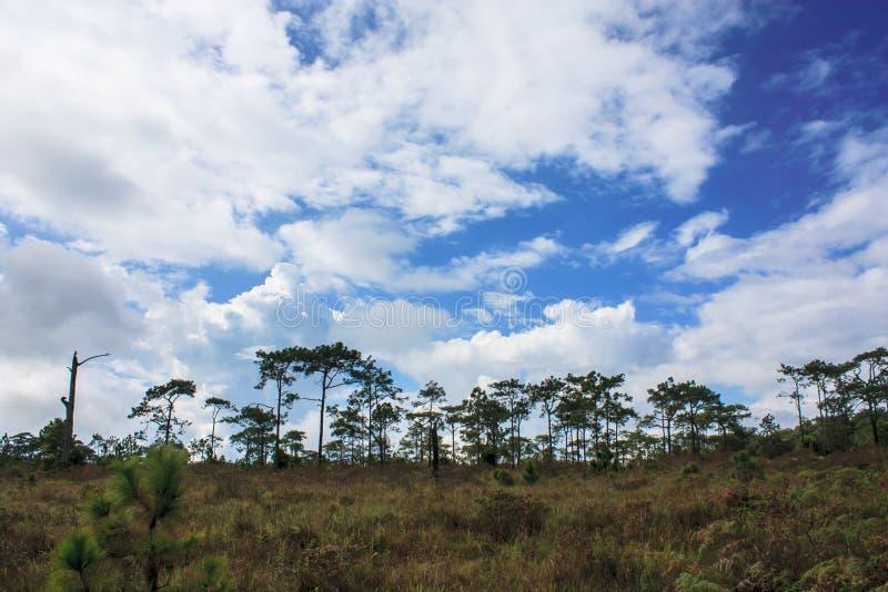 Wald in Thailand stockfotografie