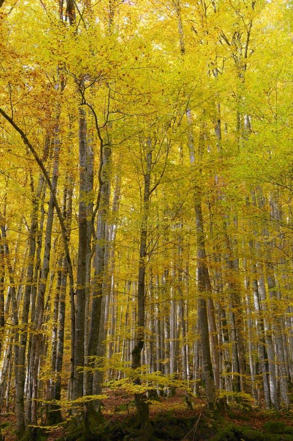 Wald und Blätter in den herbstlichen Farben stockbilder