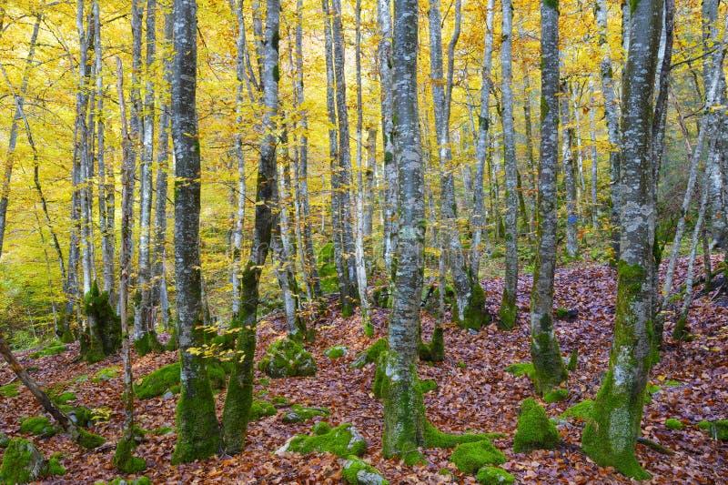 Wald und Blätter in den herbstlichen Farben stockfoto
